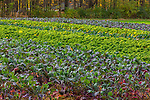 Fall colors crops in the Lincoln Conservation Land in Lincoln, Massachusetts, USA