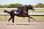 #146Fasig-Tipton Florida Sale,Under Tack Show. Palm Meadows Florida 03-23-2012 Arron Haggart/Eclipse Sportswire.