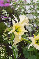 Summer Blooming Bulbs Stock Photos