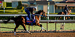 October 28, 2019 : Breeders' Cup Sprint entrant Engage, trained by Steven M. Asmussen, exercises in preparation for the Breeders' Cup World Championships at Santa Anita Park in Arcadia, California on October 28, 2019. Scott Serio/Eclipse Sportswire/Breeders' Cup/CSM