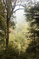 Jungle in the Nyungwe National Park, Rwanda