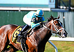 OCT 03, 2020 : Fire At Will with Kendrick Carmouche  aboard, wins the Grade 1 Joe Hirsch Turf Classic Stakes, for 3-year old & up, going 1 1/2 miles on the turf, at Belmont Park, Elmont, NY.  Dan Heary/Eclipse Sportswire/CSM