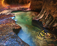 """A long exposure of fall leaves swirling around the emerald pools in """"The Subway"""" of Zion National Park."""