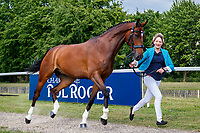 GBR-Ibby Macpherson presents Ballinamurra de Valera during the First Horse Inspection for the CCI-L2* Section D.  2019 GBR-Saracen Horse Feeds Houghton International Horse Trial. Wednesday 22 May. Copyright Photo: Libby Law Photography