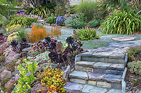 Stone steps entry steps into front yard urban, garden with succulents on slope; Oakland, California