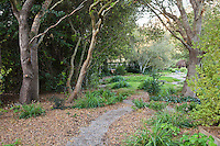 Garden room with gravel path in naturalistic California shady oak woodland garden with brown leaves left as natural organic mulch groundcover