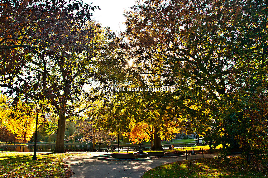 Beautiful yellow and green trees on a sunny day at the Boston Commons park in Boston