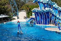 The Dolphin Show at Seaworld, Orlando, Florida, USA.