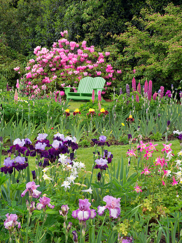 Iris and other flowering plants with chair at Schriners Iris Garden. Oregon. Background is blurred - For magazine or calendar use or smaller only. Not for large fine art reproduction.