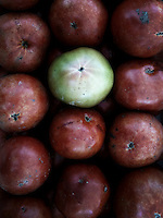 Rows of red tomatoes with one green tomato in the pattern. iPhone photo.