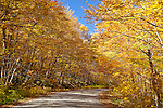 Fall foliage in the Bigelow Preserve in Carrabassett Valley, ME, USA