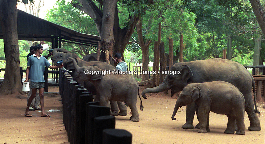 The Elephant Transit Home is a facility within Udawalawe National Park in Sri Lanka.  It is established in 1995 by the Sri Lanka Department of Wildlife Conservation.  It is the place to rehabilitate orphaned elephant calves for ultimate release back into the wild.