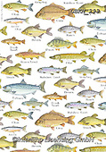 Kate, GIFT WRAPS, GESCHENKPAPIER, PAPEL DE REGALO, paintings+++++Fishes repeat,GBKM293,#gp#, EVERYDAY ,sticker,stickers