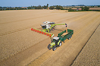 Claas Lexion 780 harvesting wheat - Lincolnshire, August