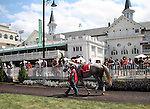 September 06, 2014:   Flashback in the paddock before the G3 Ack Ack Handicap at Churchill Downs. He is a full brother to Zazu, trained by Wayne Catalano, ridden by Shaun Bridgmohand, and owned by Gary and Mary West.  He finished third in the race to Bradester. ©Mary M. Meek/ESW/CSM