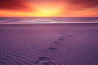 Sunrise. Footprints on a Beach. Cape Hatteras National Seashore. North Carolina