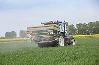 Applying prilled nitrogen to winter wheat - Lincolnshire, May