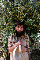 A man carries foliage back from his fields near Peshawar.