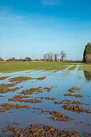 Flooded wheat field following heavy rain - Lincomshire, January