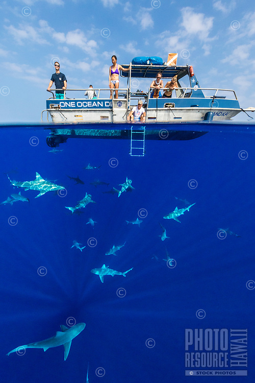 Crew members of a pelagic dive tour One Ocean Diving educate their customers on shark biology and conservation efforts off of Haleiwa, North Shore of O'ahu.