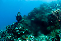 Scubadiver observing a spring of fresh water, dive site La Source, Tahiti Island, Society Archipelago, French Polynesia, Pacific Ocean