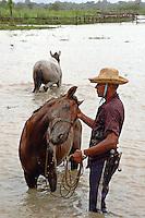Vaqueiro lava  seu cavalo, fazenda Tuiuiu.<br /> Cachoeira do Arari, Pará, Brasil.<br /> 08/05/2006<br /> Foto Paulo Santos/Interfoto