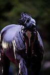 October 22, 2021: Zenyatta Statue at Santa Anita Park in Arcadia, California on October 23, 2021. Evers/Eclipse Sportswire/CSM
