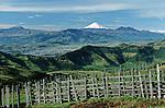 Amérique du Sud. Equateur. Trekking sur les volcans d'Equateur.Vue du Cotopaxi au lever du soleil (5897 m) depuis le chemin du Guagua Pichincha.South America. Ecuador. Trekking on the volcanoes