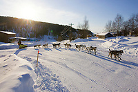 Mitch Seavey on road into Ruby arriving @ checkpoint during 2006 Iditarod Race Interior Alaska Winter