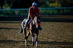 November 3, 2020: Venetian Harbor, trained by trainer Richard Baltas, exercises in preparation for the Breeders' Cup Filly & Mare Sprint at Keeneland Racetrack in Lexington, Kentucky on November 3, 2020. Jon Durr/Eclipse Sportswire/Breeders Cup