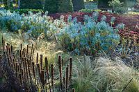 France, Indre-et-Loire (37), Chenonceaux, château et jardins de Chenonceau, le potager, potager des fleurs avec d'avant en arrière, Liatris, Stippa tenuissima, Euphorbia characias, Sedum spectabile
