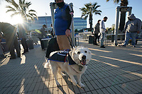 SAN JOSE, CA - MAY 1: A dog dressed up in Quakes gear before a game between D.C. United and San Jose Earthquakes at PayPal Park on May 1, 2021 in San Jose, California.