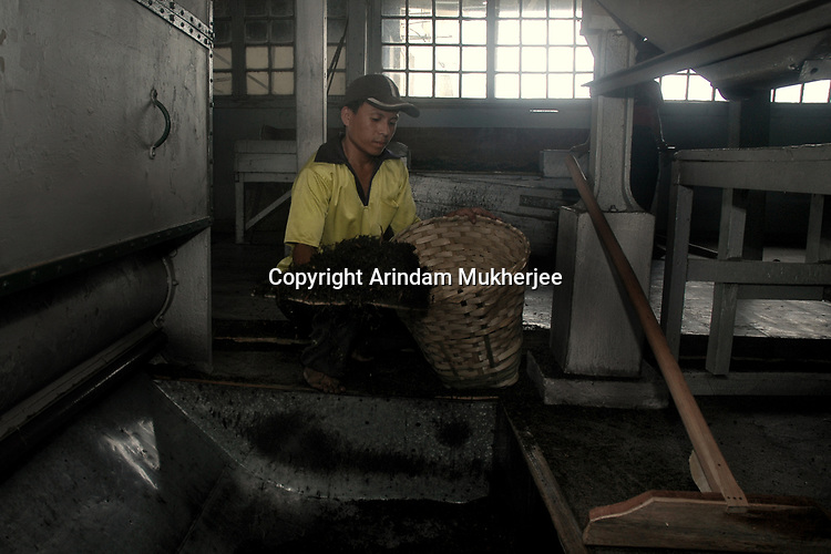 A worker gathers machine dried tea leaves at a tea factory in Darjeeling