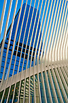 Looking up through the white spokes of Santiago Calatrava's World Trade Center Transportation Hub