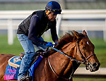 January 24, 2019:Accelerate exercises as horses prepare for the Pegasus World Cup Invitational on January 24, 2019 at Gulfstream Park in Hallandale Beach, Florida. Scott Serio/Eclipse Sportswire/CSM