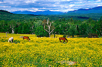 Horse in fileld of wildflowers.