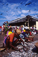 INDIA, Mangaluru, women at market in fishing harbour / INDIEN Mangalore, Frauen auf Fischmarkt im Fischereihafen