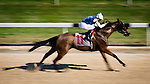 OLDSMAR, FL - JANUARY 21: Chesapeake Spring #11 (white hat), ridden by Edwin Gonzalez, down the final stretch during the #5 race, on Skyway Festival Day at Tampa Bay Downs on January 21, 2017 in Oldsmar, Florida. (Photo by Douglas DeFelice/Eclipse Sportswire/Getty Images)