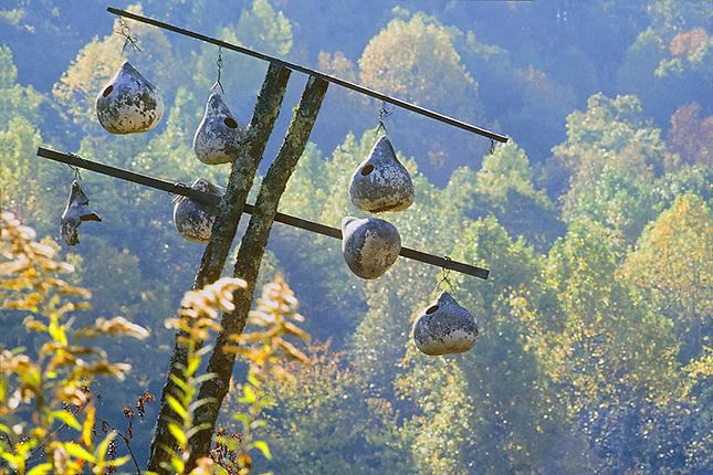 Gourd bird nest for purple martins