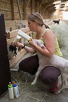 """Europe/France/Aquitaine/33/Gironde/Pauillac:Les Agneaux élevés à Pauillac par Domingo Reyes à la """"Bergerie des Grands Crus""""-La fille de Domingo donne le biberon à un jeune agneau"""