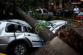New York, New York<br /> September 16, 2010<br /> <br /> Park Slope after a severe storm and possible tornado. A tree falls directly on a car on 5th Street and 6th Avenue.