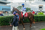 Saratoga Dreamer(1) with Jockey Emma-Jayne Wilson aboard before the Summer Stakes at Woodbine Race Course in Toronto, Canada on September 13, 2014 with Jockey Patrick Husbands aboard.