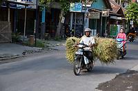 Yogyakarta, Java, Indonesia.  Transporting Animal Fodder via Motorbike.