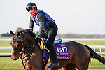 November 5, 2020: Oleksandra, trained by trainer Neil D. Drysdale, exercises in preparation for the Breeders' Cup Turf Sprint at Keeneland Racetrack in Lexington, Kentucky on November 5, 2020. Dan Heary/Eclipse Sportswire/Breeders Cup/CSM