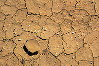 SW DROUGHT