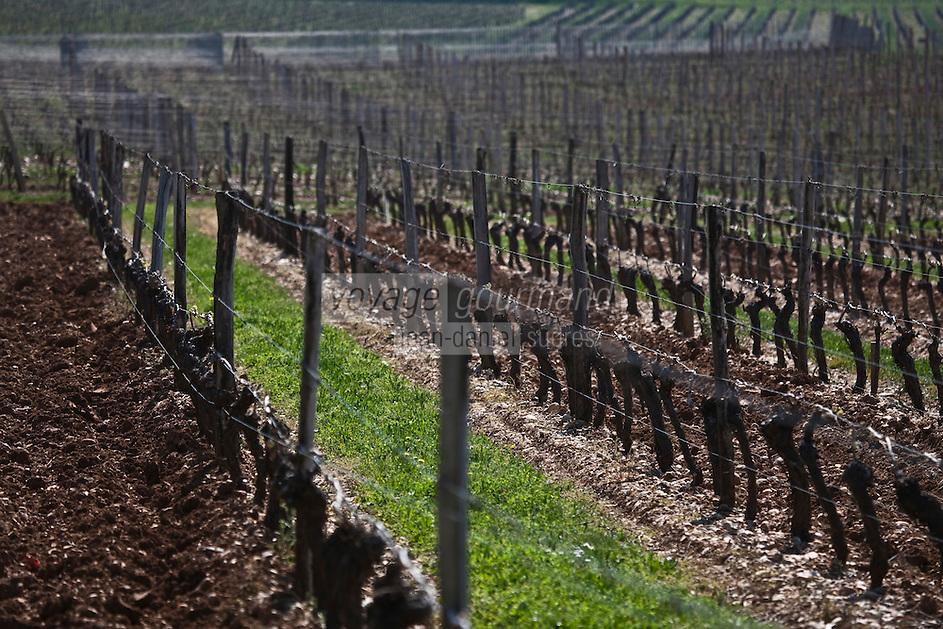Europe/Europe/France/Midi-Pyrénées/46/Lot/Vire-sur-Lot: Clos Triguedina - le vignoble