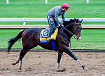 October 30, 2020: Higher Power, trained by trainer John W. Sadler, exercises in preparation for the Breeders' Cup Classic at Keeneland Racetrack in Lexington, Kentucky on October 30, 2020. Scott Serio/Eclipse Sportswire/Breeders Cup/CSM