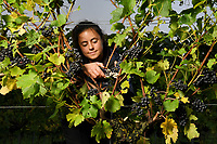 British vineyard beats the French and crowned the international sparkling wine producer of the year.