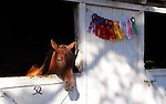 Horse and ribbons at Cheshire Fair in Swanzey, New Hampshire USA