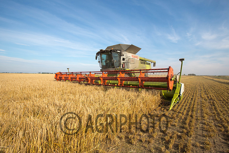 Harvesting Winter Barley in South Lincolnshire<br /> Picture Tim Scrivener 07850 303986